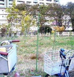 西東京市民まつり