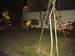 ららぽーと柏の葉