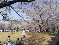 お花見in所沢航空記念公園
