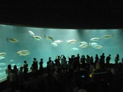 葛西臨海公園水族館<br />