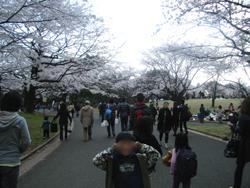お花見in所沢航空公園