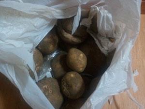 学校で収穫したジャガイモ